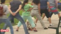 Un bouledogue passe en skateboard entre les jambes de 30 personnes