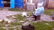 Muster. Funny trained ducklings