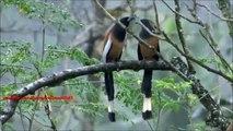 Oiseau duo. Drôles d'oiseaux chanter en duo