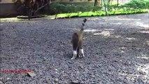 Avec sa tête dans la nourriture. Funny cat a mangé de l'emballage