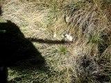 mouton mort prématurement