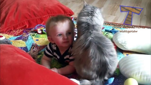 Cute cats cuddling and playing with babies - Cat & baby compilation