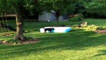 Ce chien transforme une piscine en vaisseau spatial! Trop drôle