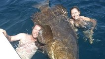 Monster Goliath Groupers - LARGEST GOLIATH GROUPER EVER ON YOUTUBE! - Incredible Viral Fis