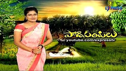 Organic Rice farming by V.V.Rama Rao Krishna District - Express TV