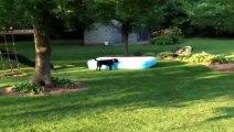Ce chien transforme une piscine en vaisseau spatial! Trop drô