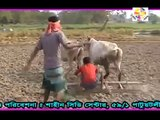 Bengali funny video (Lot of laugh)_Laughing _funny _video
