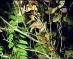 HIDDEN PREDATORS HUNTING - Sneakiest Animals On The Planet [Animal Nature Documentary]