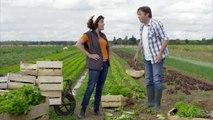 MSA en ligne pour les professionnels de l'agriculture