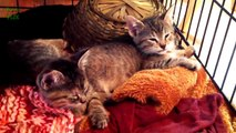 Funny Cats and Dogs Falling Asleep Compilation 2014 NEW HD