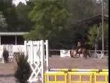 concours cso à poney