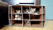 Cute Kittens vs Handmade Fort Funny Cats