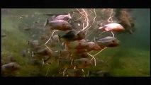 Animals Documentary: Documentary On Seals - Wildlife Documentary HD