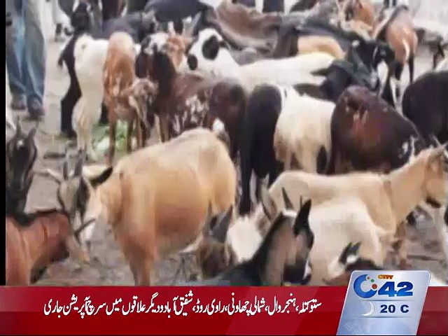 District Livestock Department will provide cattle's to widows