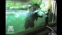 Ce que cet ours fait quand l'enfant se déplace est trop beau et marrant