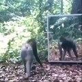 Check This Monkey :D Lol....