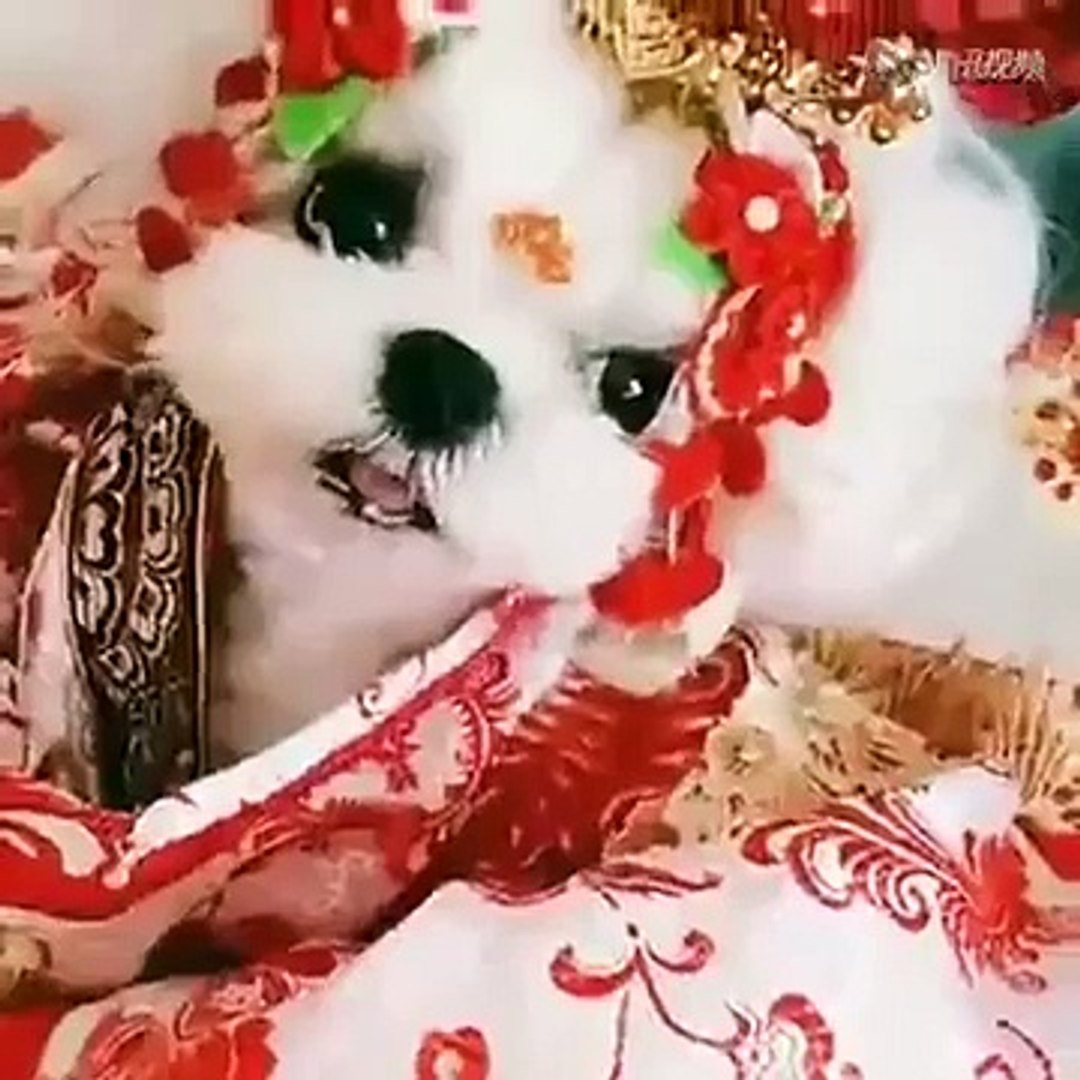 Cute dogs Cute dogs videos