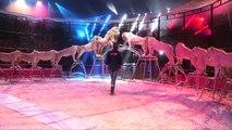Les fauves du cirque Pinder avec Frédéric Edelstein jusqu'au 24 janvier 2016 à Paris