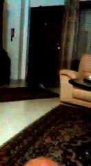 Battles between cats- 1