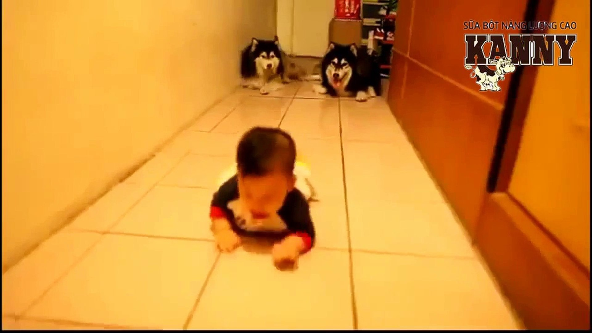 Dog and boy comedy, Funny 2015, Prank 2015, Funny Prank 2015, Video 2015