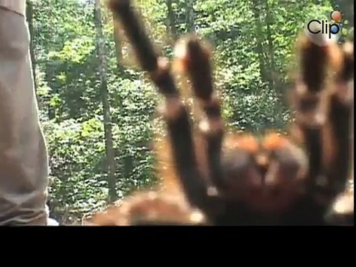 Amazon giant spiders attacking the camera, Funny 2015, Prank 2015, Funny Prank 2015, Video 2015