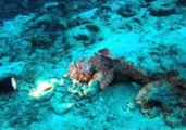 Diver Treated to Beautiful Scenery at Similan Islands
