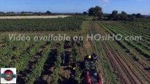 Vendange à la main en Anjou filmée par drone,Qualité 4K, Pays de La Loire, France - ©Mickael COURANT