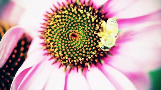 Ashish Dewan- Colors Mother Nature