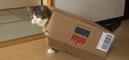 Des belges tweetent des gif et des vidéos de chatons pendant les opérations antiterroristes