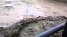 Lumi Zezë del nga shtrati, përmbyt qendrën e Fushë-Krujës  - Ora News- Lajmi i fundit-