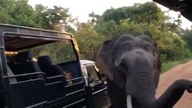 Elephant customs. Funny elephant inspects vehicles