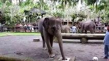 Elephants have fun  Funny elephants and elephants