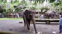 Los elefantes se divierten. Elefantes y elefantes divertidos