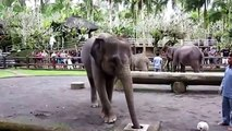 Les éléphants ont du plaisir. Les éléphants et les éléphants drôles