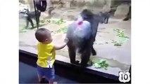 L'événement au zoo. Singe drôle et amusant bébé