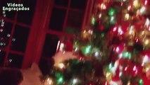 Arbres de Noël drôle chats. funny cats