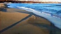 Drôle mouette fuir les vagues. Drôle goéland qui longe la plage