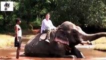 ゾウ、人間とゾウ。おかしい象と象