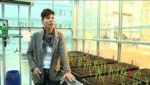 """Le """"piante della resurrezione"""" speranza per il global warming"""