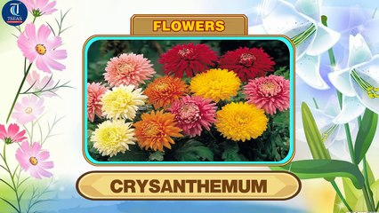 Learn Names of Flowers | Flower Names in Animation Video | Learning for Kids