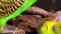 Most Beautiful Colorful Birds (National Geographic)