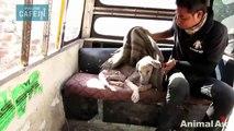Sauvetage émouvant d'un chien abandonné devenu dur comme pierre
