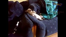Los perros se adhieren a los gatos. Perro divertido gatos aburridos