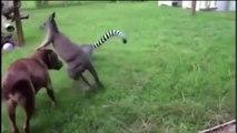 Perros contra los animales. Perro divertido jugar con diferentes animales