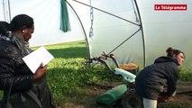 Agriculture biologique. Le Sénégal en visite en terre bretonne