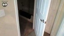Preuve que les chats domineront le monde ils savent ouvrir l