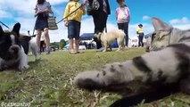 Buzz : Un chat va à la rencontre de 50 chiens pendant un salon canin !