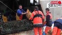 Port de pêche de Saint-Malo: la coquille Saint-Jacques