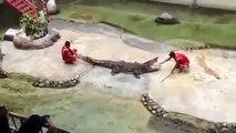 Mira cómo este cocodrilo casi se devora a su entrenador en pleno show