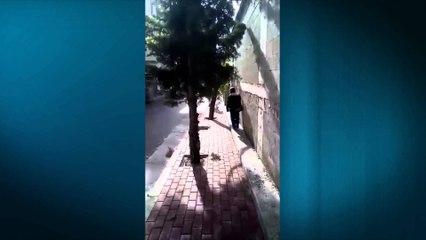 Cudira shqiptare - Ja cfare ndodh ne Lezhe!!!